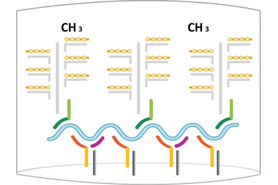 Zellveranderung durch hpv vírus